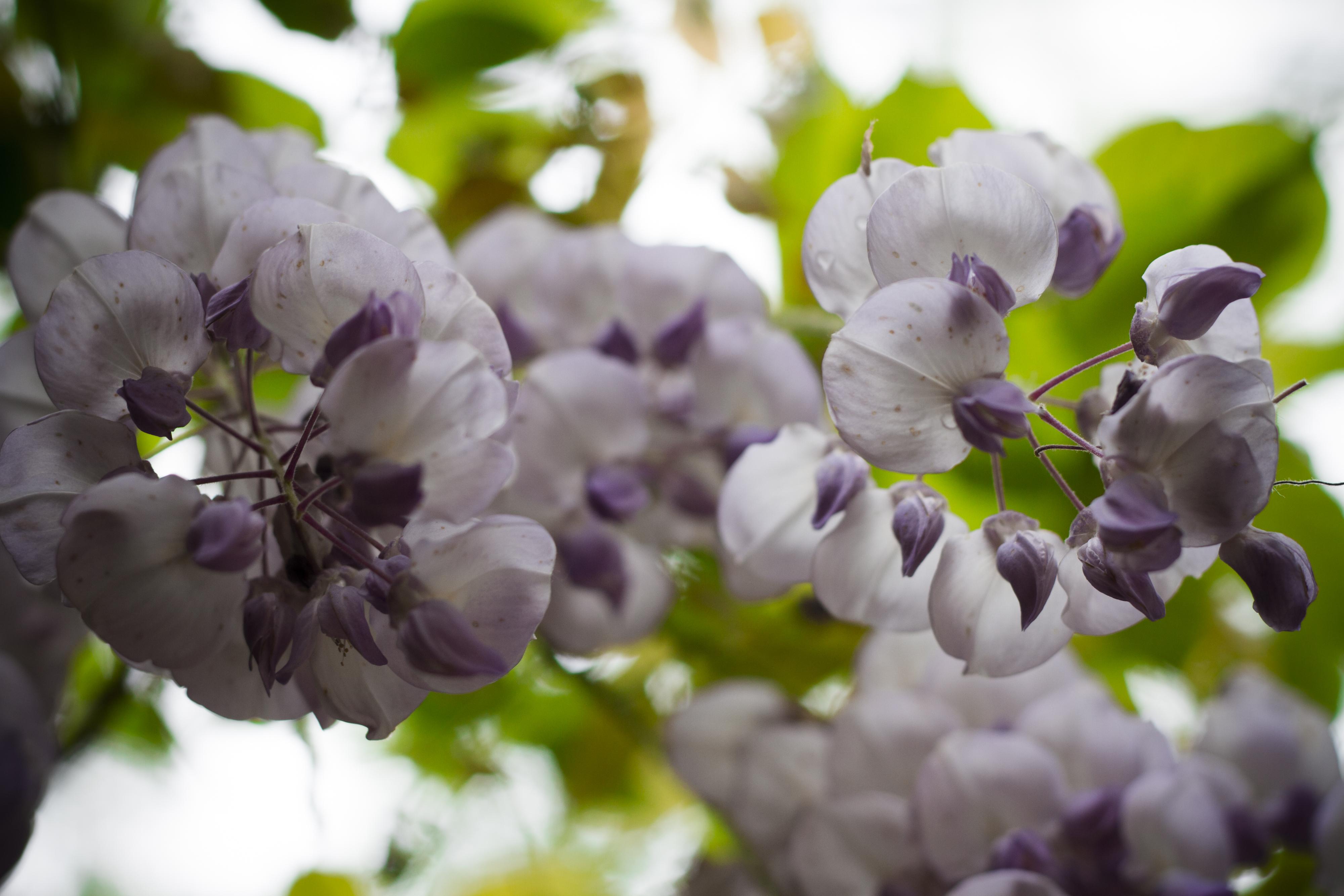 primavera a villa petrobelli