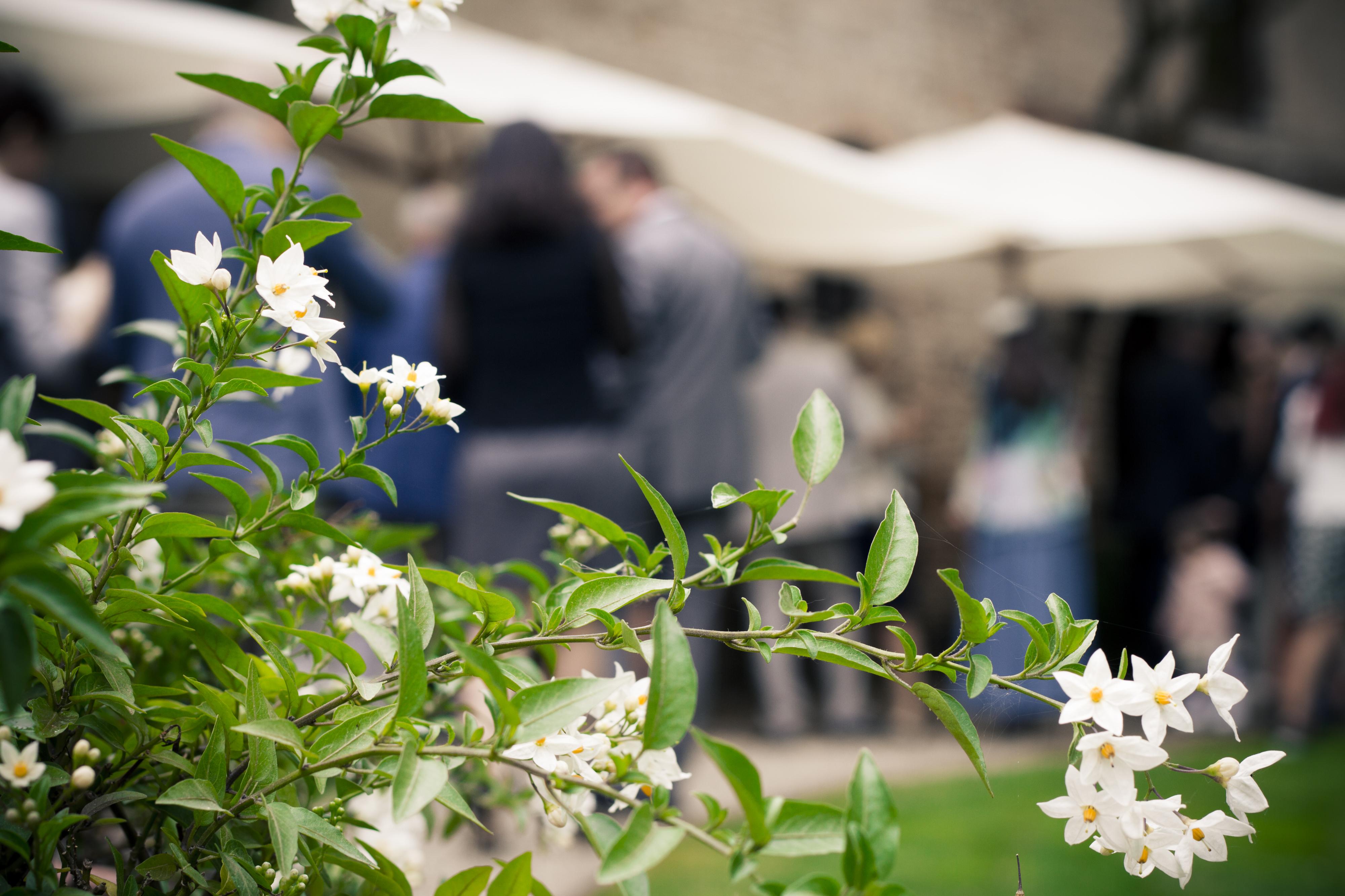 wedding flowers la mandolina