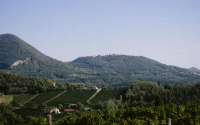 MATRIMONIO DI-VINO